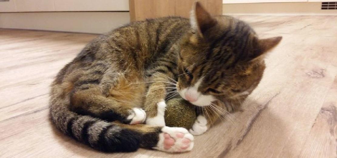 Balle à l'herbe à chat Natural Catnip