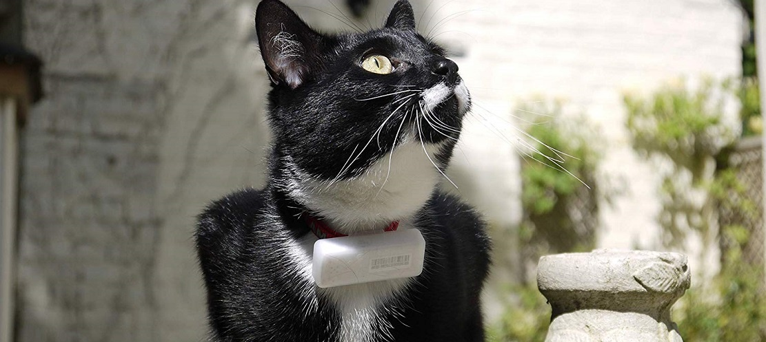 Collier GPS Weenect Cats 2