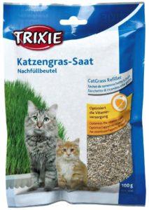 Herbe à chat à faire pousser Trixie