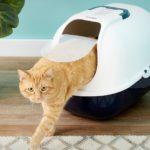 Les 10 meilleures maisons de toilette pour chat (avec et sans filtre)
