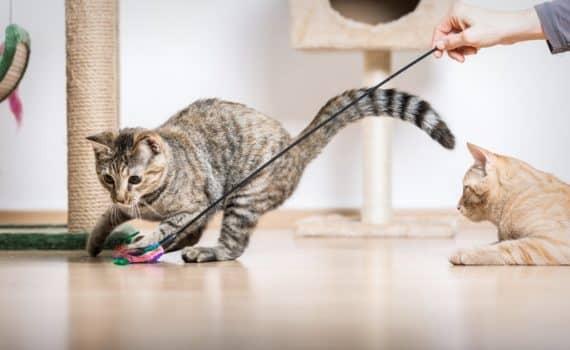 Les 30 meilleurs jouets pour chat