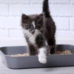 Les 4 meilleures litières minérales pour chat