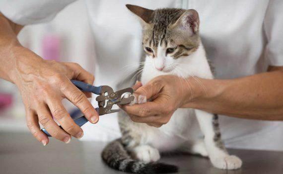 Les 4 meilleurs coupes-griffes pour chat