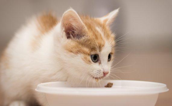 Les 5 meilleures croquettes pour chaton