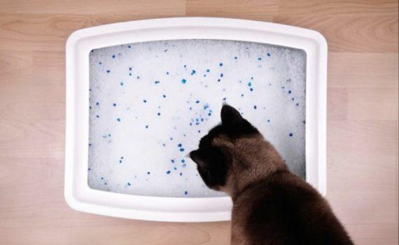 Les 5 meilleures litières de silice pour chat