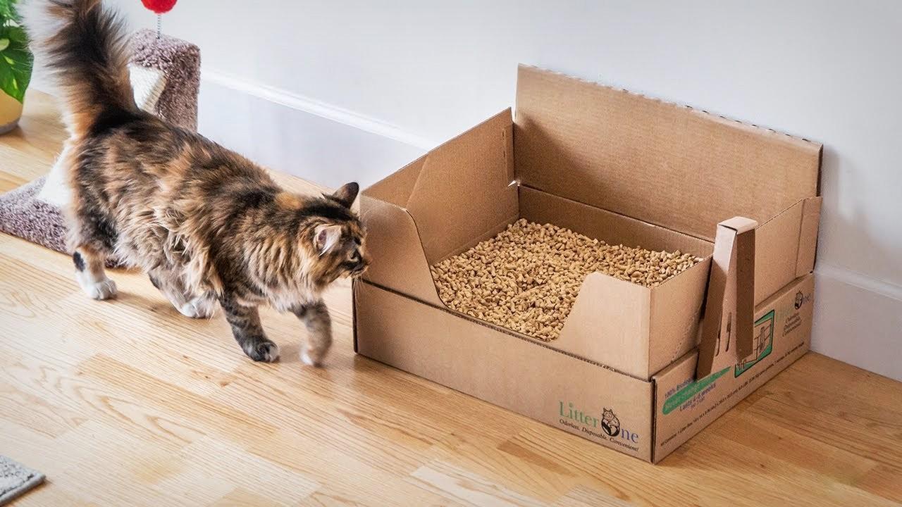 Les 5 meilleures litières végétales pour chat