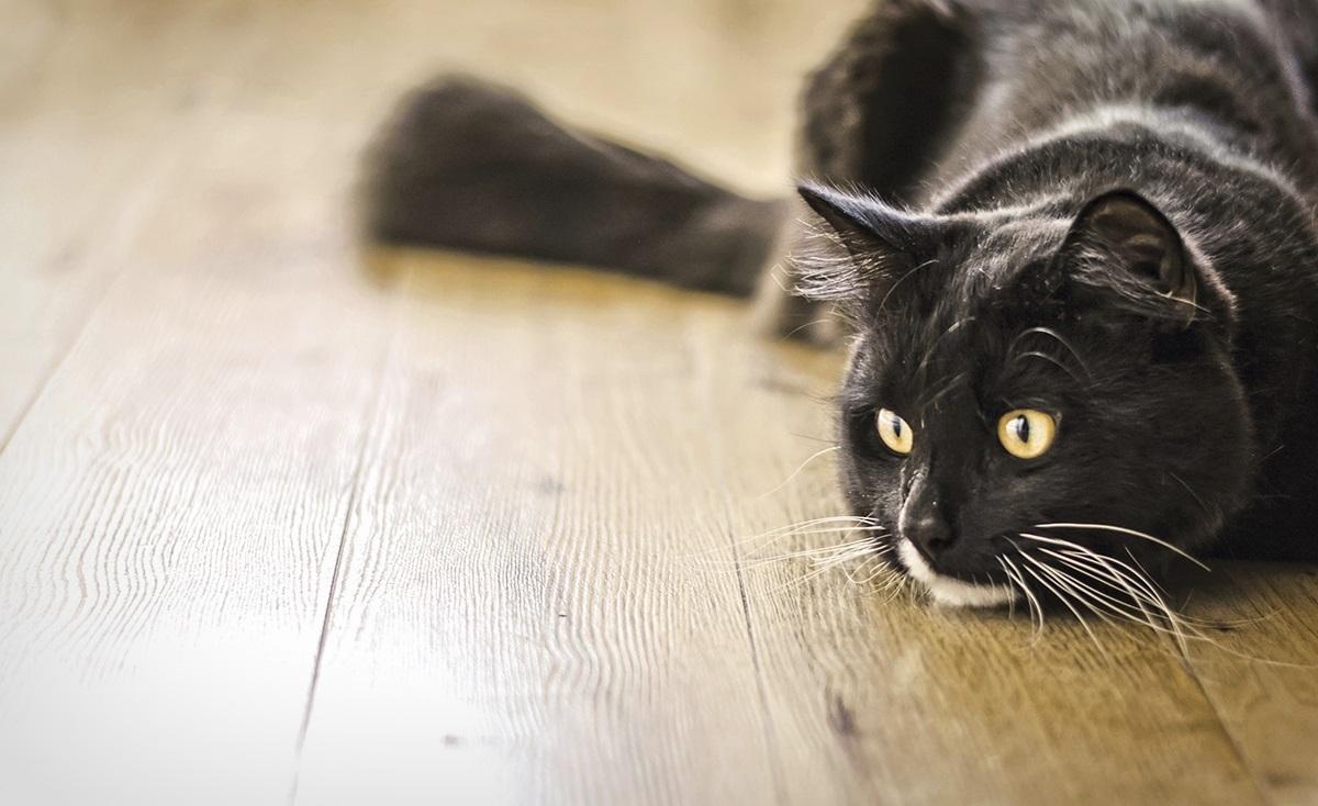Les 5 meilleurs désodorisants pour chat