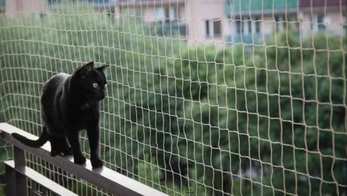 Les 5 meilleurs filets de protection pour chat (balcon et fenêtre)