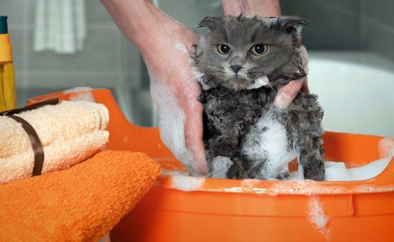 Les 5 meilleurs shampooings pour chat