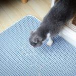 Les 5 meilleurs tapis à litière pour chat