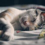Les 6 meilleurs coussins pour chat (+ coussins chauffants)
