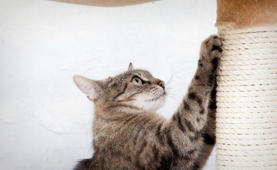 Les 6 meilleurs griffoirs pour chat