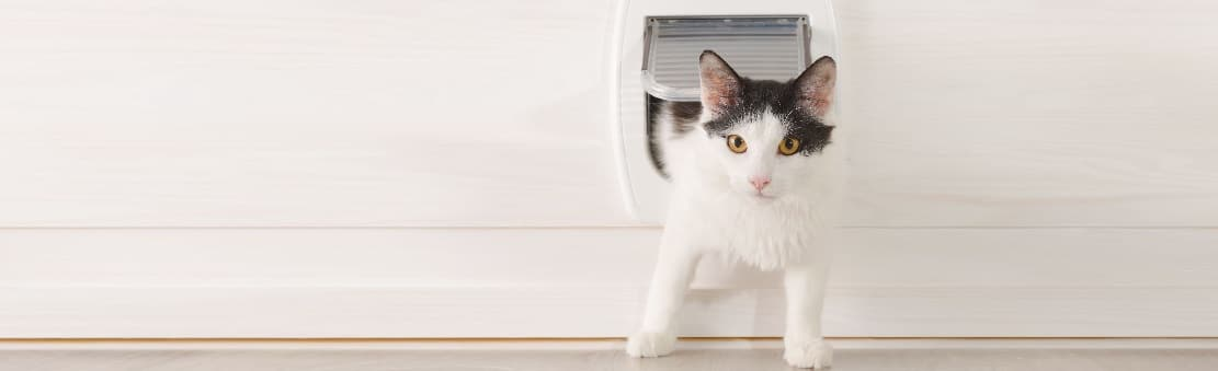 Les 8 meilleures chatières (électroniques et manuelles)