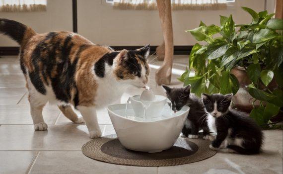 Les 8 meilleures fontaines à eau pour chat