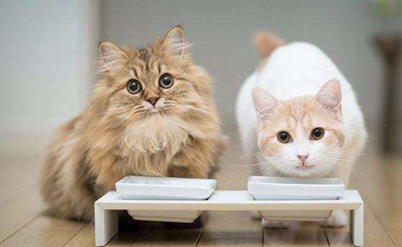Les 8 meilleures friandises pour chat et chaton