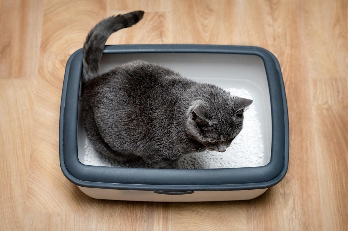 Les 8 meilleures litières agglomérantes pour chat