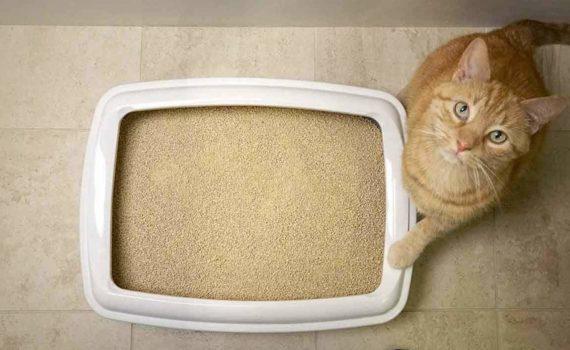 Les 8 meilleures litières pour chat
