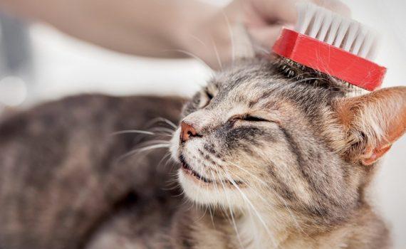 Les 8 meilleurs brosses et démêloirs pour chat