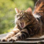 Les 8 meilleurs produits anti-stress pour chat
