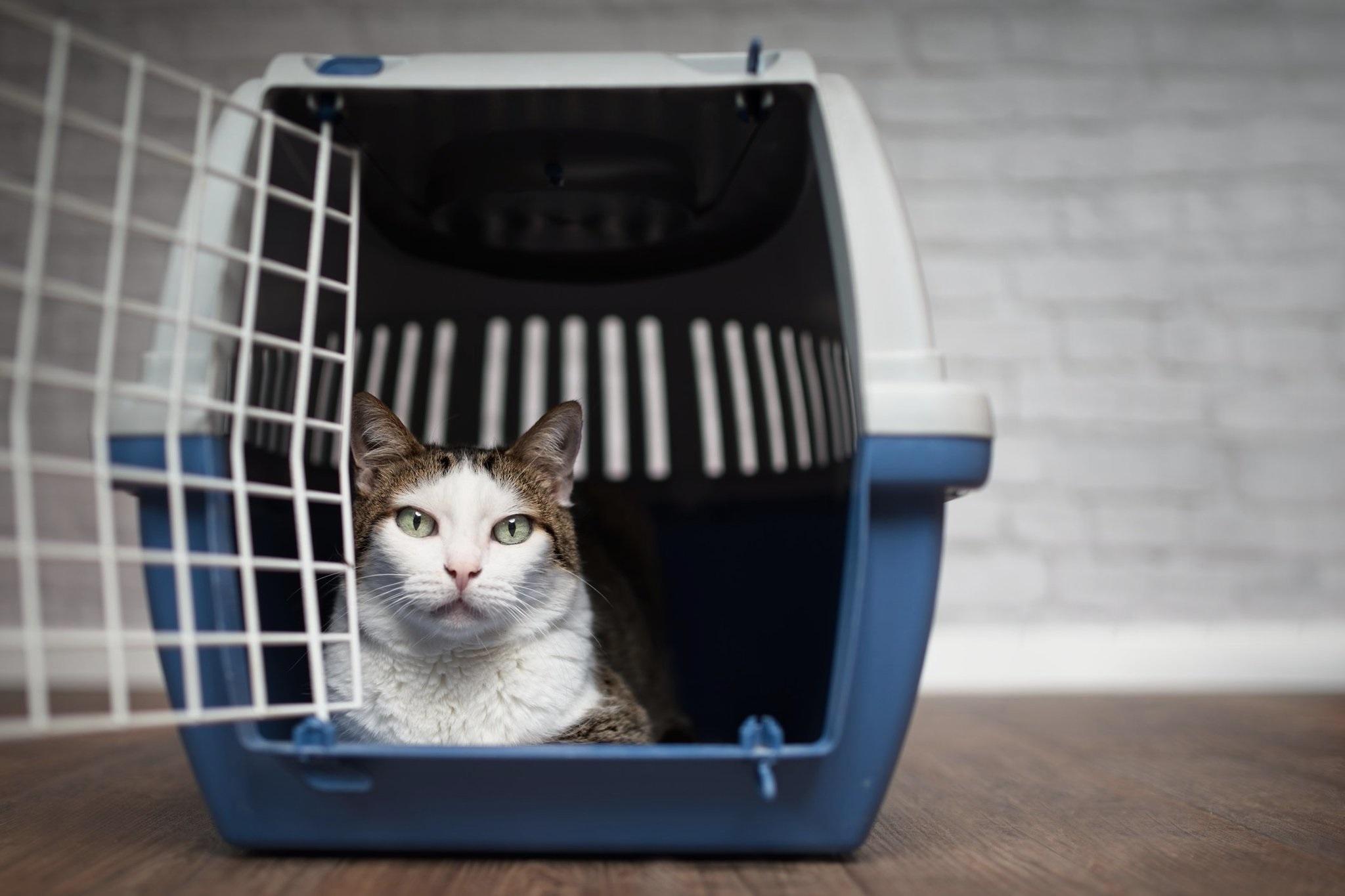 Les 9 meilleurs accessoires de transport pour chat (paniers, caisses et sacs)