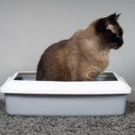 Les 9 meilleurs bacs à litière pour chat