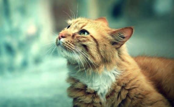 Les meilleurs anti-puces et anti-tiques pour chat