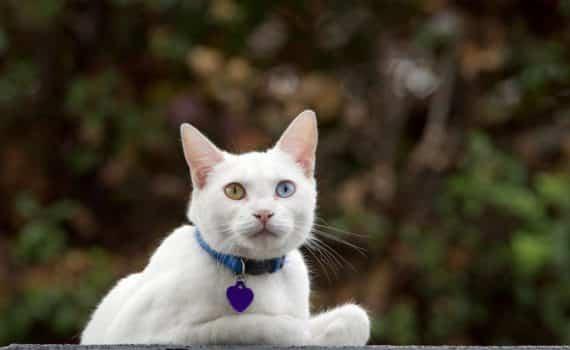 Les meilleurs colliers et traceurs GPS pour chat