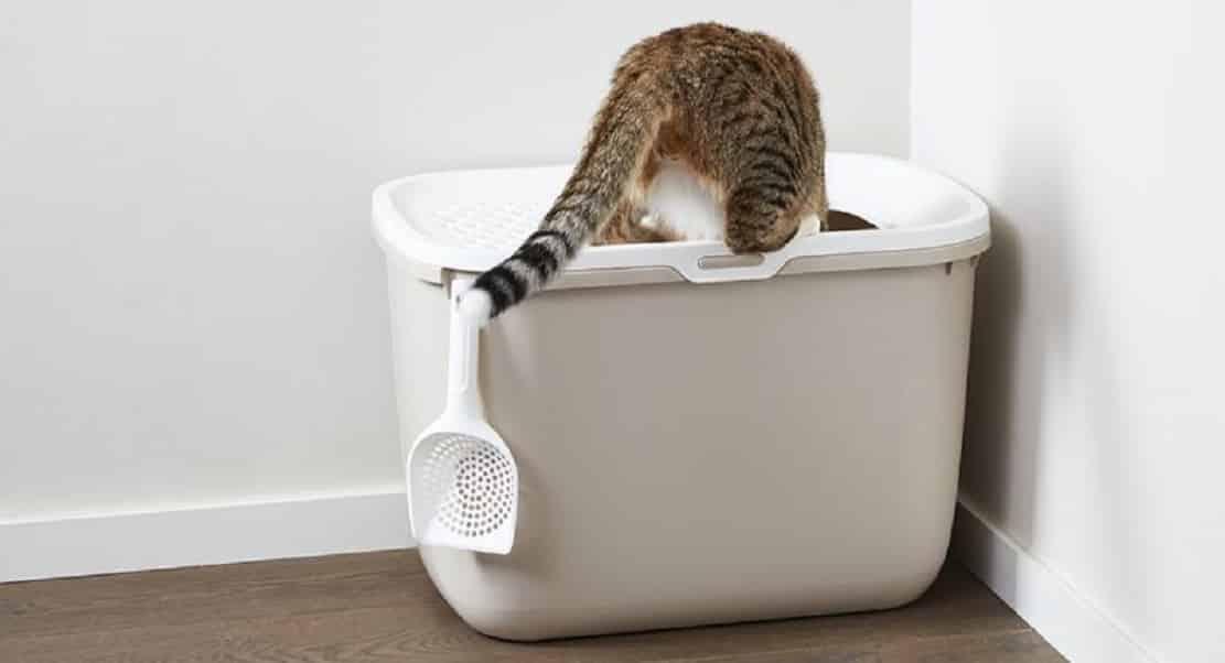 Maison de toilette sans filtre Savic Hop In