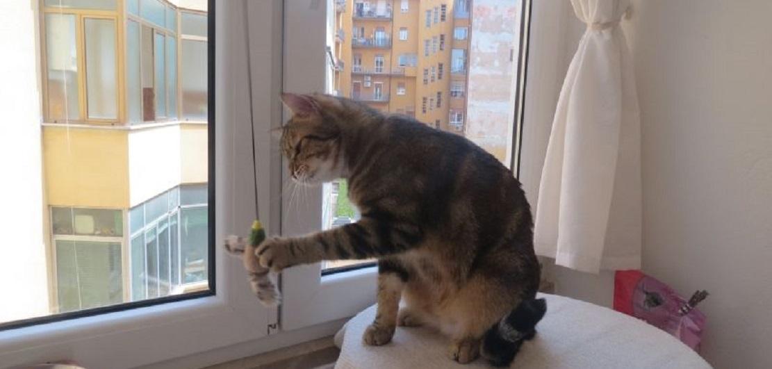 Oiseau à l'herbe à chat à suspendre
