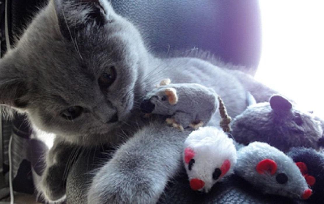 Souris à la menthe à chat Trixie