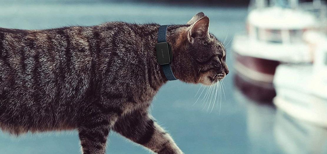 Traceur GPS Invoxia Pet Tracker