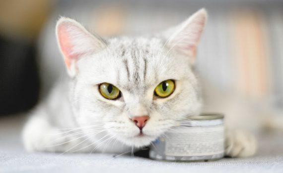 La meilleure nourriture humide pour chat (boîtes, sachets et barquettes)