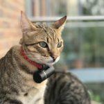 Les 4 meilleurs traceurs GPS pour chat