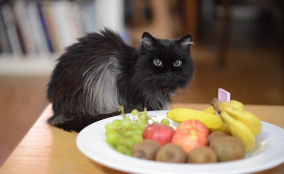 Mon chat peut-il manger des bananes ?