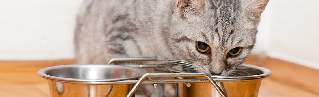 Pourquoi les chats emportent-ils leur nourriture loin de leur gamelle ?