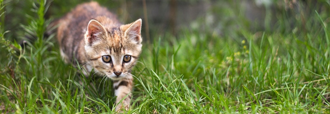 Pourquoi les chats ramènent-ils des animaux morts à la maison ?