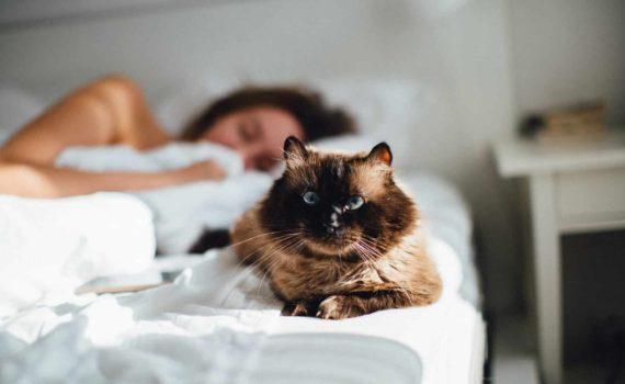 Pourquoi votre chat dort-il sur votre tête ?