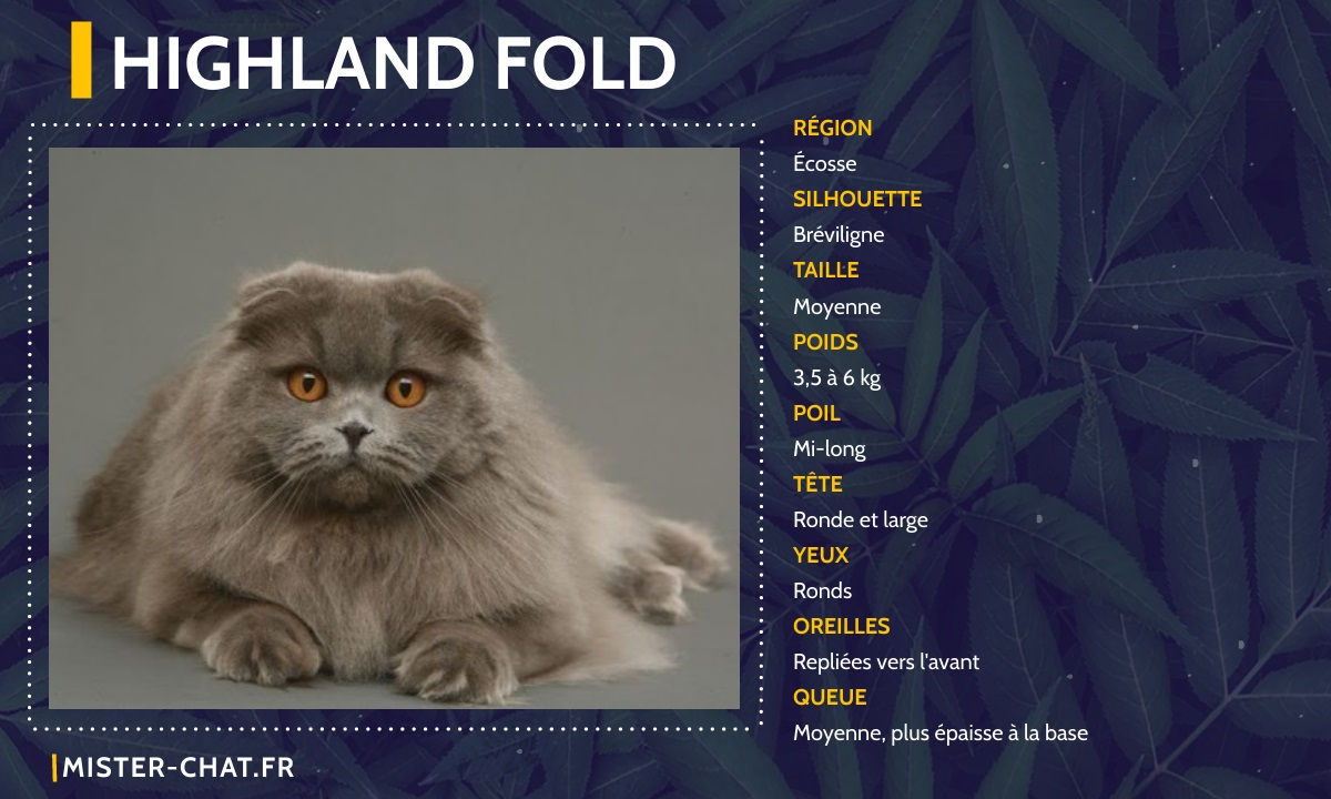 highland fold