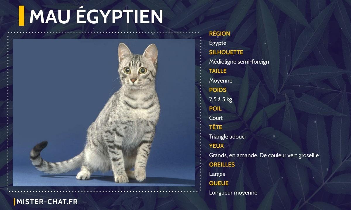 mau égyptien