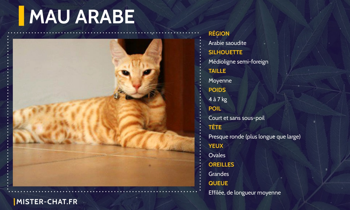 mau arabe